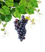 Fresh grapevine
