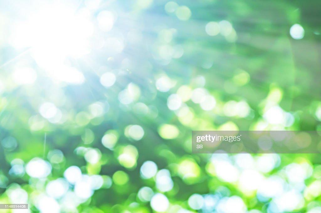 fresh green and sun : Stock Photo