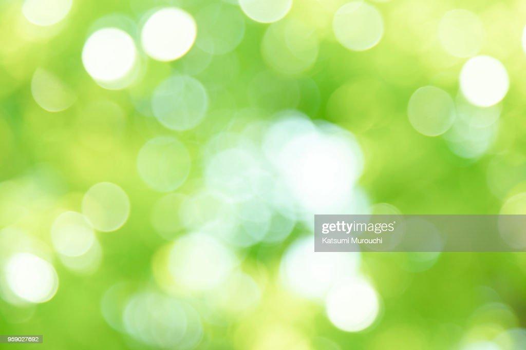 Fresh green blur background : Stock Photo