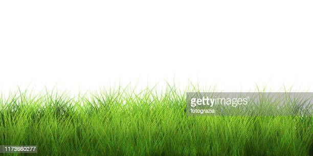 fresh green grass isolated on white - grass stock pictures, royalty-free photos & images