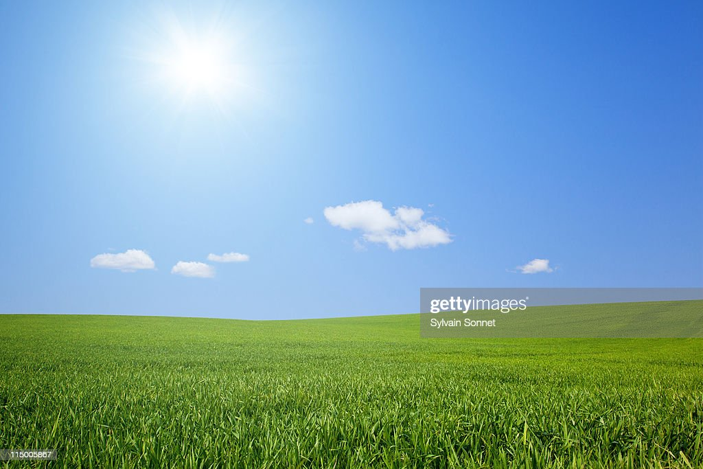 fresh green grass with bright blue sky : Stock Photo