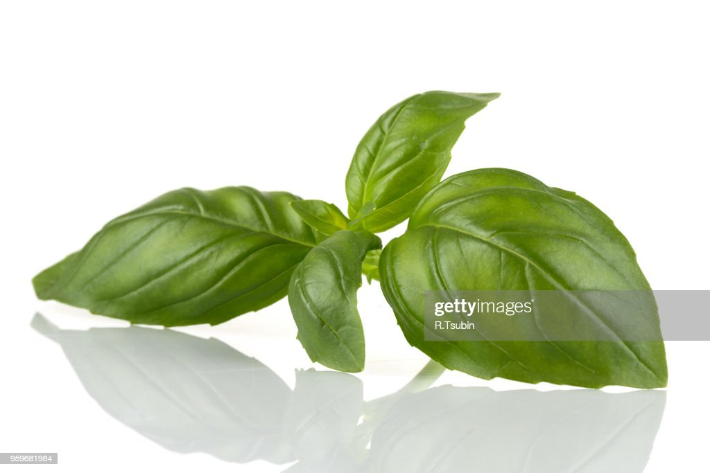 Fresh green leaf basil isolated on a white background : Stock-Foto