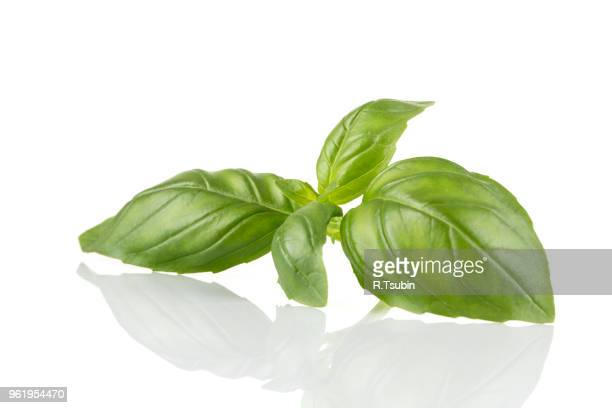 Fresh green leaf basil isolated on a white background