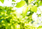 http://www.istockphoto.com/photo/fresh-green-leaves-in-springtime-gm535417910-94903239