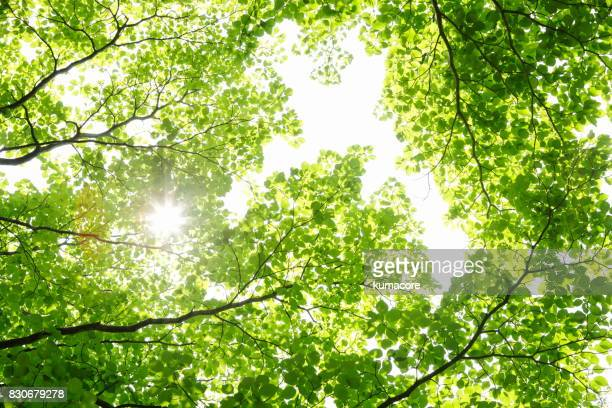 fresh green leaves - lush stock pictures, royalty-free photos & images
