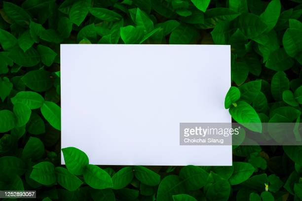 fresh green leaves with paper card note. - lush stock pictures, royalty-free photos & images
