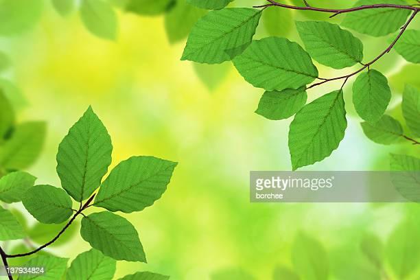 Fresh Green Leaves XXXL