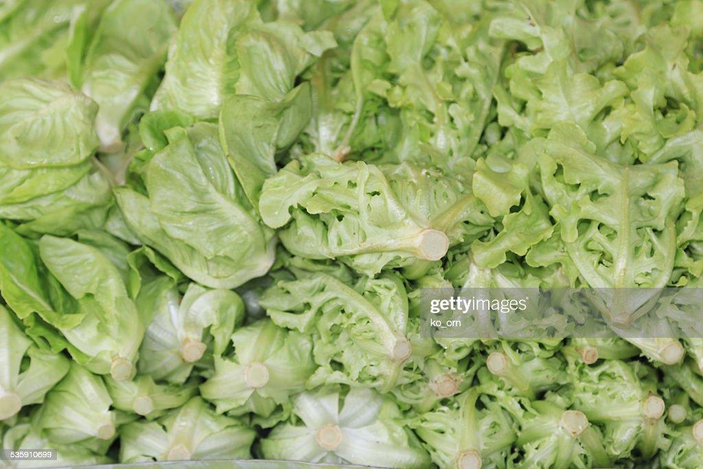 Fresh green lettuce : Stock Photo