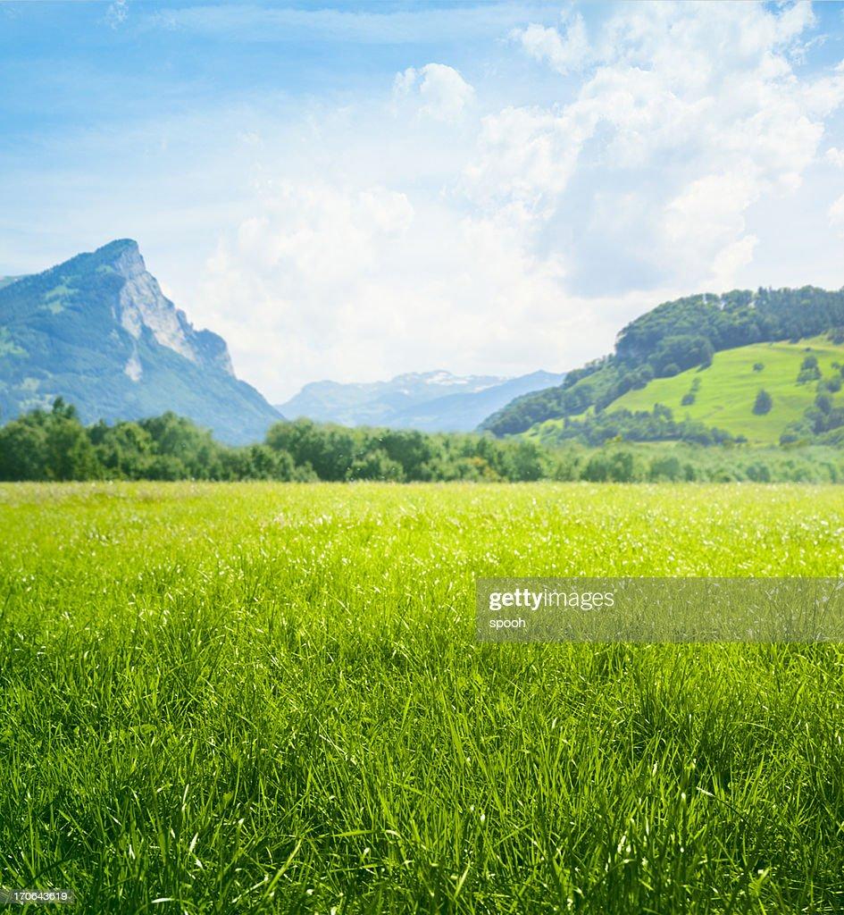 Prado verde fresco en las montañas : Foto de stock