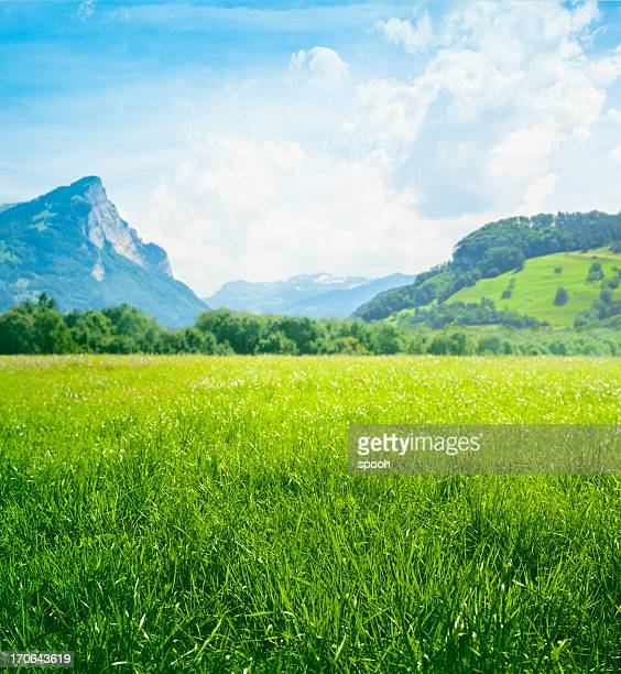 fresh green meadow in mountains - lush stock pictures, royalty-free photos & images