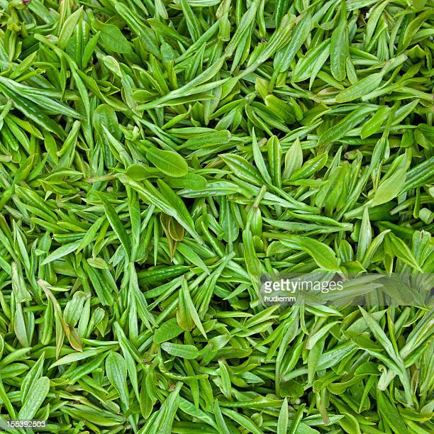 fresh green tea leaves background - tea leaves stock photos and pictures