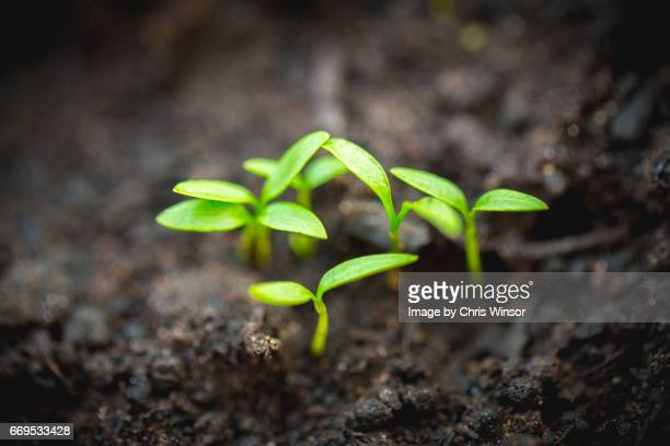 fresh growth - seedling stock pictures, royalty-free photos & images