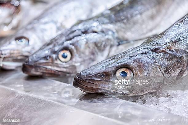 fresh hake, for sale, at fish market - merluza fotografías e imágenes de stock