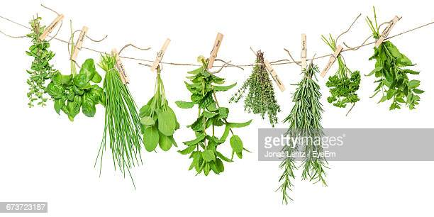 Fresh Herbs Hanging From Rope