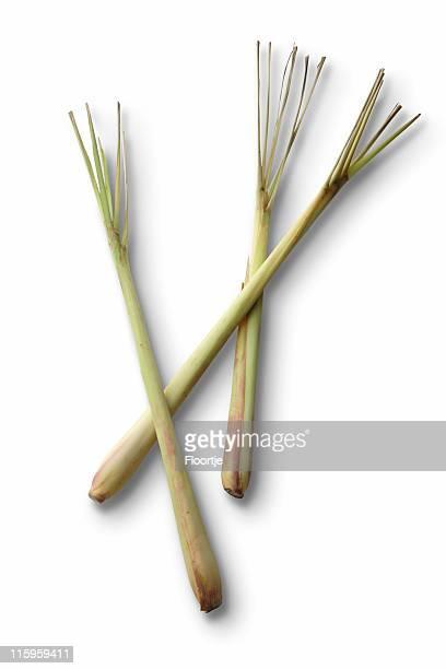 plantas aromáticas frescas: erva-cidreira sereh - erva cidreira imagens e fotografias de stock