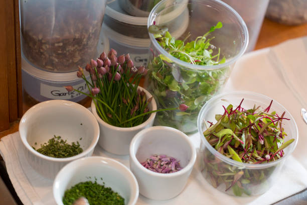 """Fresh Herbs """"mise en place"""" or organization before cooking in kitchen"""