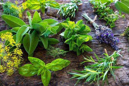 Fresh herbs on wooden background 504069254