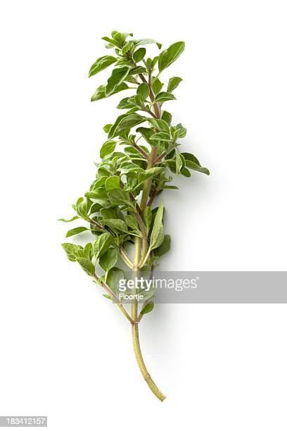 Fresh Herbs: Oregano Isolated on White Background