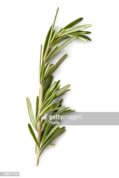 Fresh Herbs: Rosemary