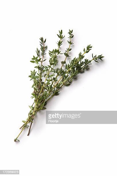 fresh herbs: thyme - twig stock pictures, royalty-free photos & images
