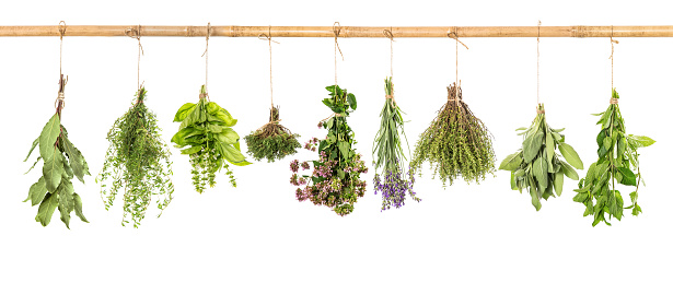 Fresh herbs white background basil sage thyme mint bay laurel 1077271680