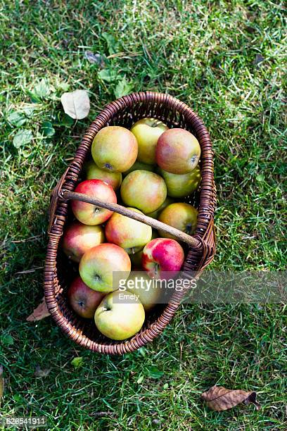 Fresh homegrown apples in basket, high angle