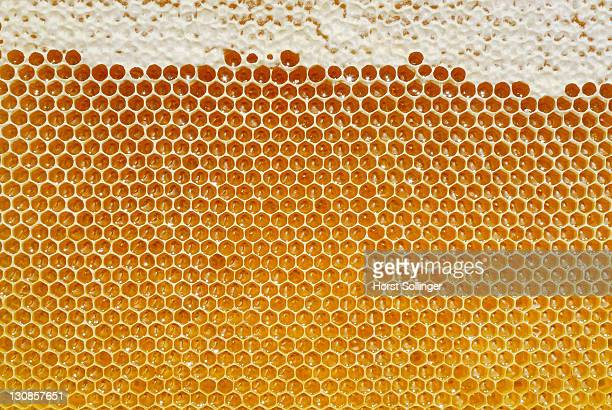 Fresh honeycomb filled with honey from flowers