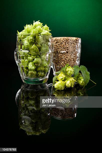 Fresh Hops and Malted Barley for Brewing Beer