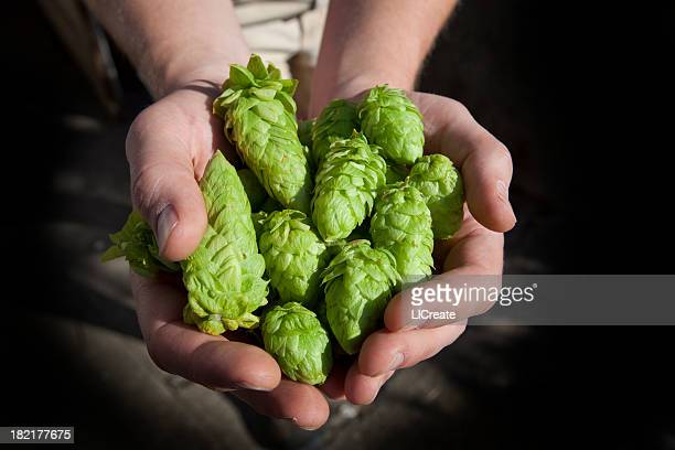 Fresh Hops Ready for Beer