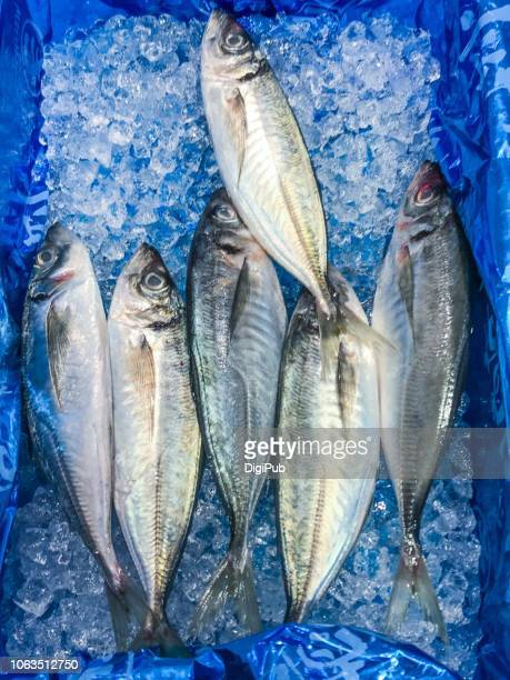 fresh horse mackerel kept in box with ice - jack fish stock pictures, royalty-free photos & images