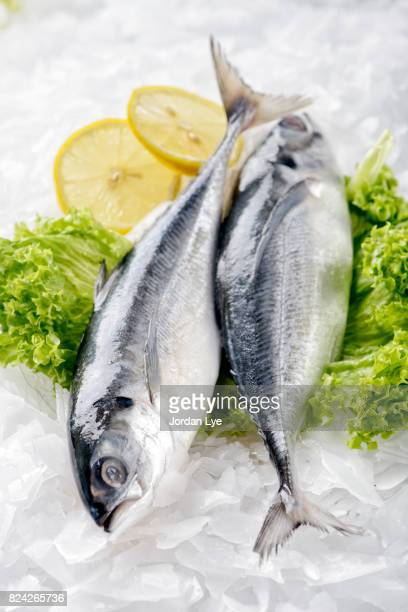 fresh horse mackerel - mackerel stock pictures, royalty-free photos & images