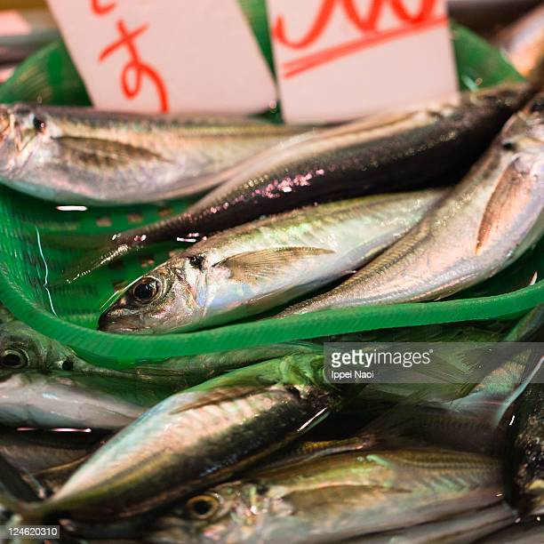 fresh horse mackerels - ippei naoi stock photos and pictures
