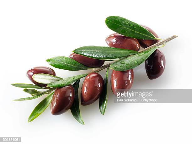 fresh kalamata olives on an olive sprig - kalamata olive stock photos and pictures
