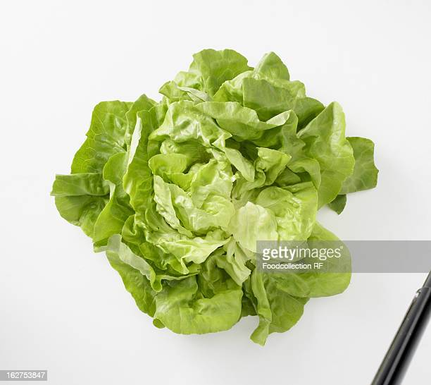 Fresh lettuce on white background