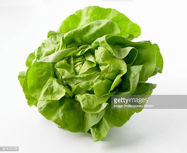 fresh lettuce - lettuce stockfoto's en -beelden