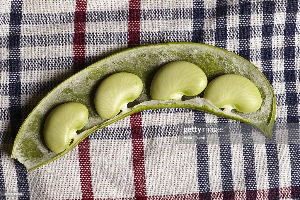 Fresh Lima Beans : Stock Photo