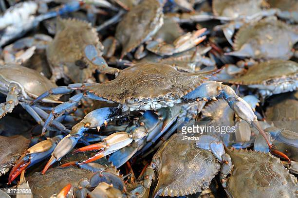 Fresh Living Blue Crabs at the Fish Market