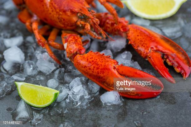 fresh lobster chilling on ice with wedges of lime - red lobster restaurant stock pictures, royalty-free photos & images