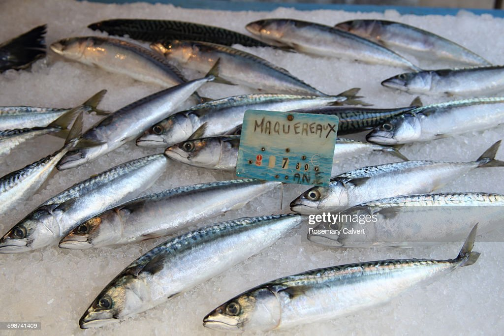 Fresh mackeral for sale in French street market : Stock Photo