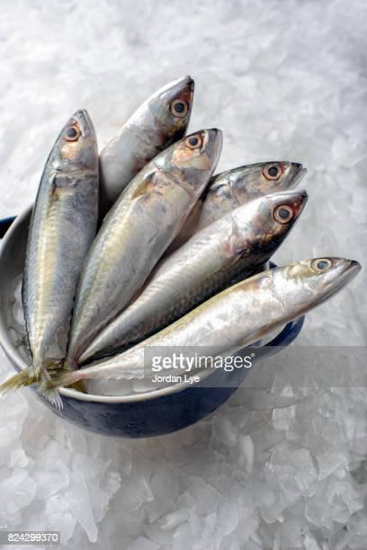 Fresh mackerel fish
