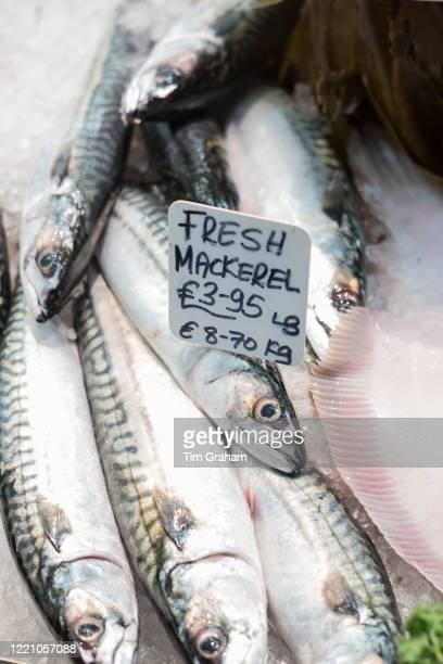 Fresh Mackerel, Scomber scombrus, on sale at St Helier Fish Market in Jersey, Channel Isles.