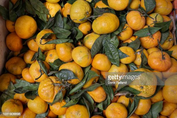 Fresh mandarines from above and many with green leaves