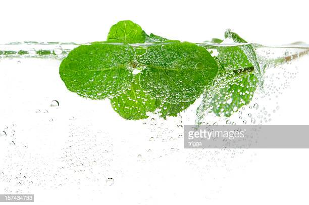 Fresh mint in water