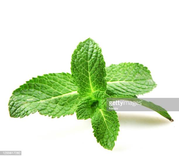 fresh mint leaf isolated on white background - ミント ストックフォトと画像