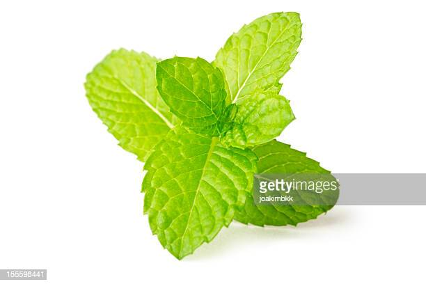 Fresh mint leaf isolated on white in macro