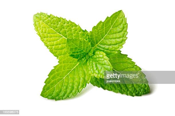 Fresh mint leaf isolated on white