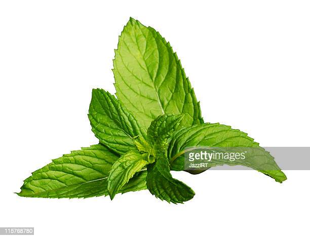Fresh mint leaves isolated on a white background