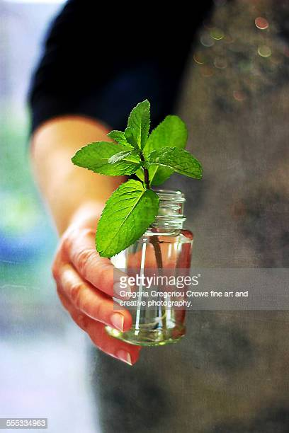 fresh mint - gregoria gregoriou crowe fine art and creative photography. stock-fotos und bilder