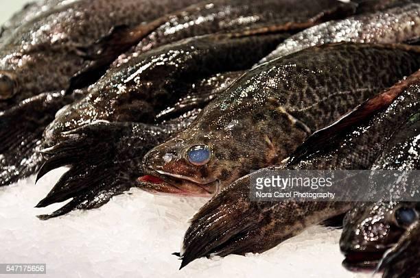 Fresh Murray cod fish on ice