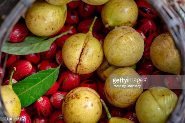 fresh nutmeg fruit - collin key stock-fotos und bilder